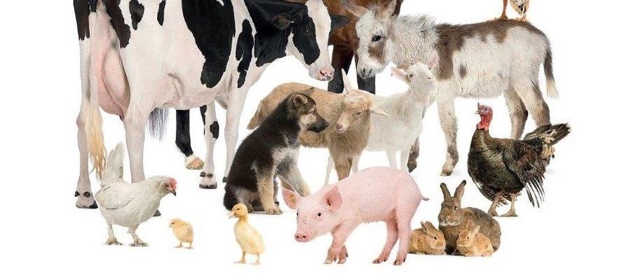 Animals Idioms